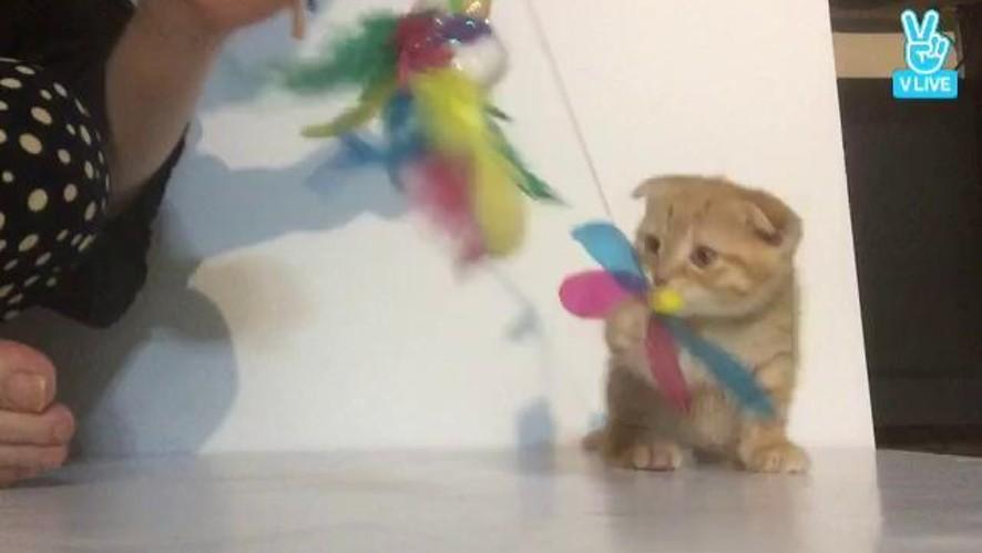 칵스 수륜의 고양아가들 먹방 겸 토크