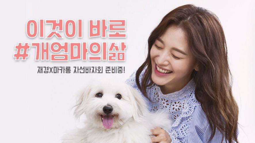 [V LIVE] 김재경, 반려견 마카롱과 자선바자회 준비중!