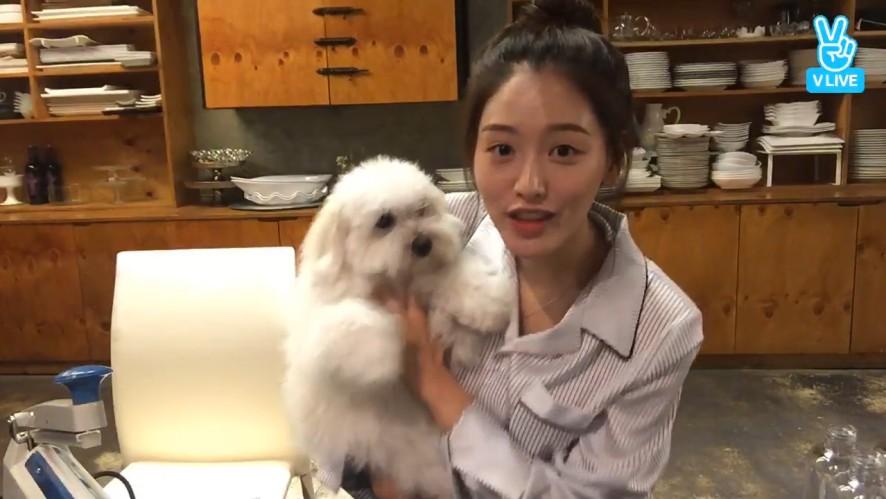 [Kim Jae Kyung] 카롱인 좋겠다🐶 재경언니가 엄마라서..(Jaekyung's puppy Macaron)