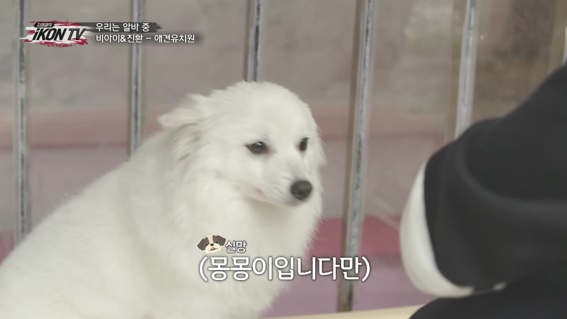 iKON - '자체제작 iKON TV' EP.3-4