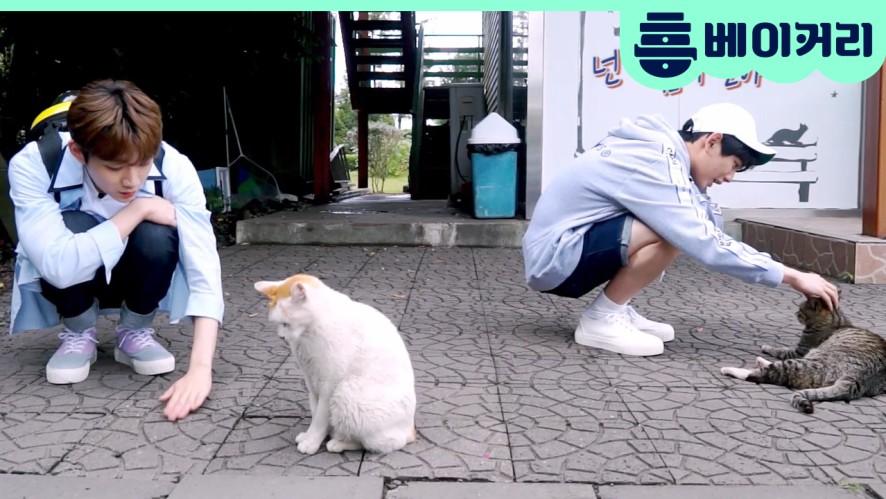 형섭X의웅, '고양이들의 천국' 제주도에 가다! - 집사인 게 자랑3 8회