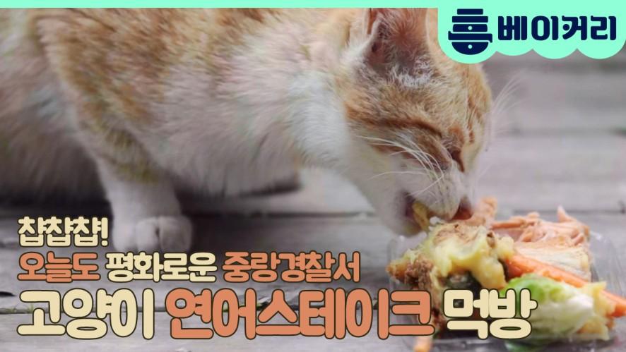 고양이 연어스테이크 먹방 - 집사인 게 자랑3 6회 비하인드