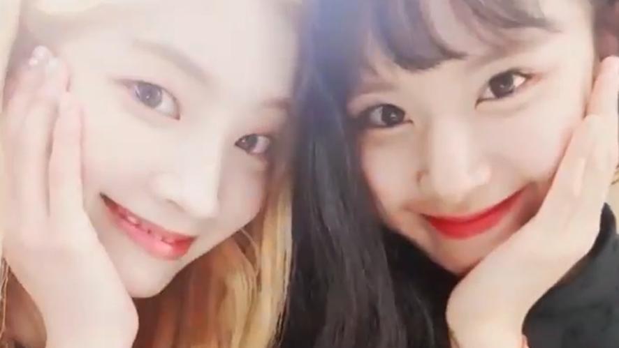 [TWICE] 둡챙의 BDZ 특별레슨 랔어둡챙💃 (DAHYUN&CHAEYOUNG dancing BDZ)