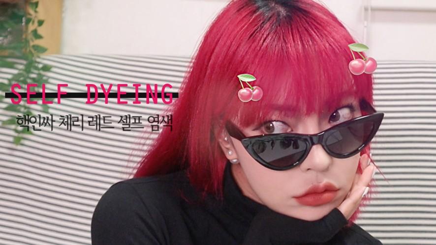체리레드 셀프염색 해봤어요! (feat.로레알컬러리스타)Self dyeing in cherry red!!