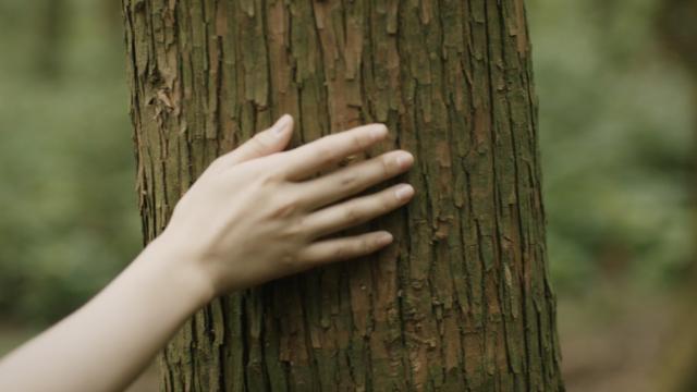 노티스노트(Notice Note) - [Teaser] Dancing Tree