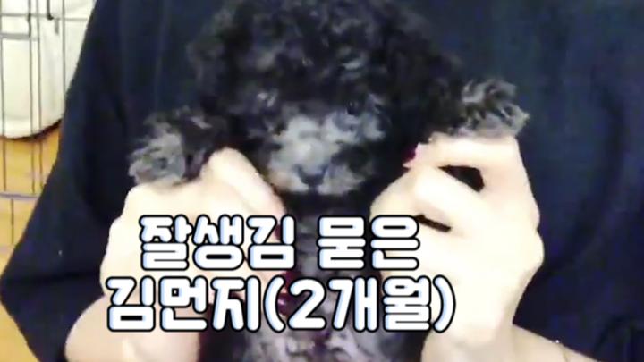 [GFRIEND] 🚨빅뉴스🚨김소정, 쇠엄마 되다! (feat.김먼지🐶) (Sowon annoucing the big news)
