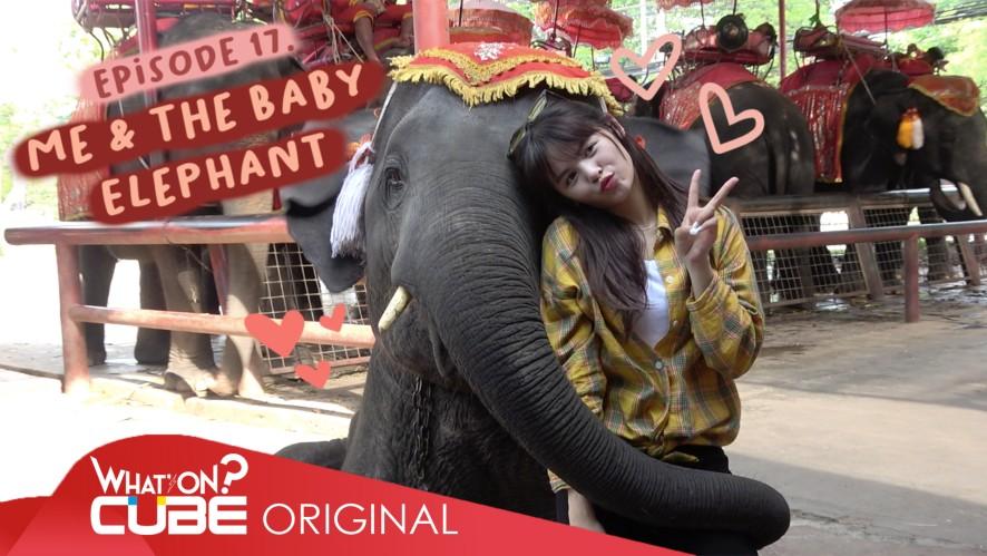 "SORN - ""PRODUSORN Diary"" 015 :  ME & THE BABY ELEPHANT"