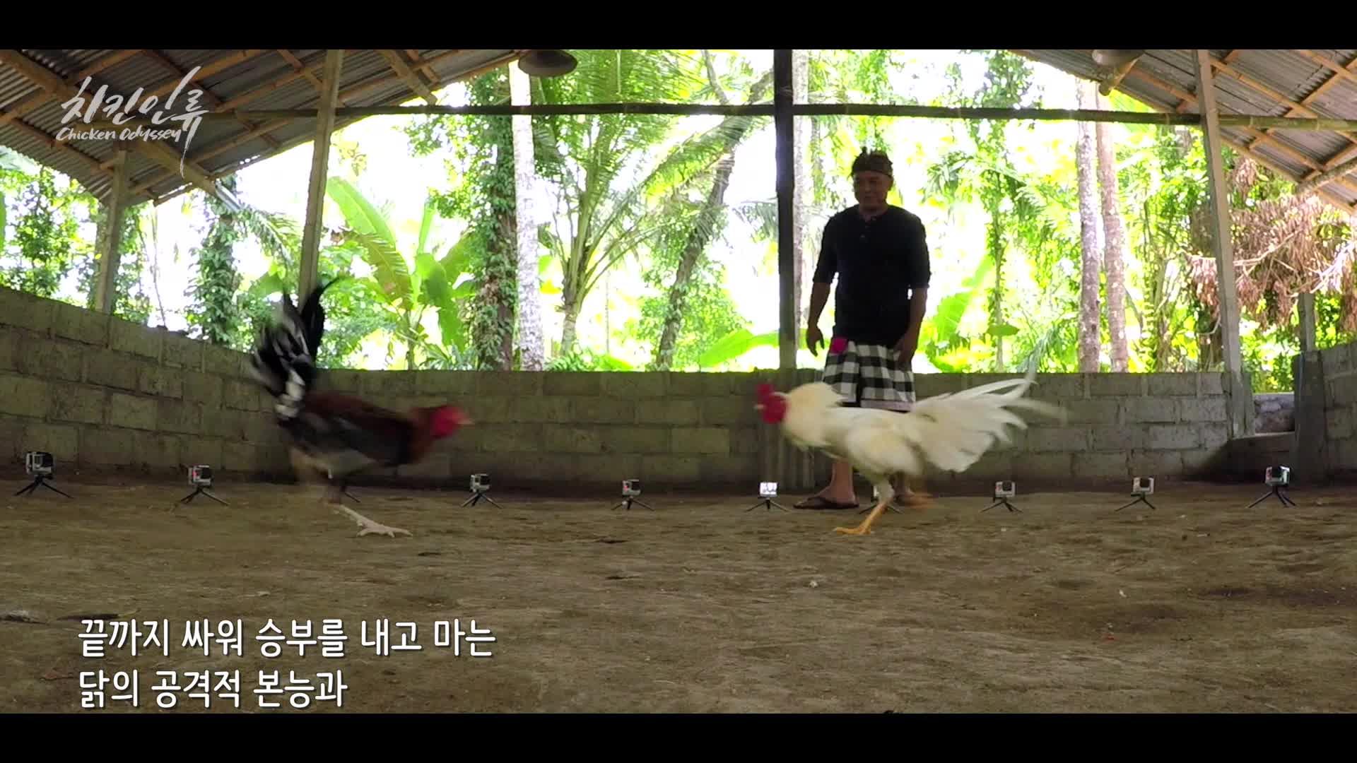 [치킨인류] EP6.아름다운 섬, 발리 그리고 닭 Chicken Odyssey. Sate Ayam in Bali