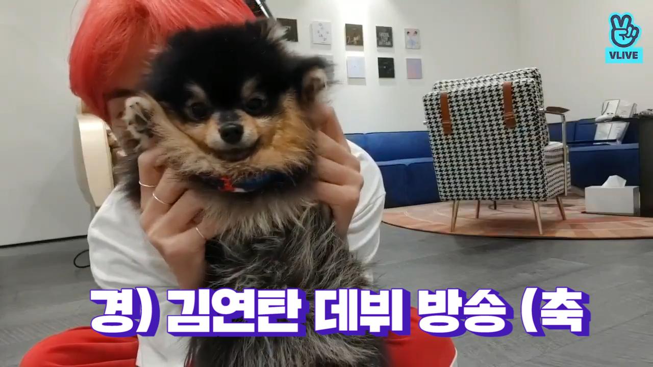 [BTS] 경) 김연탄 브이앱 데뷔 •̀ㅅ•́🐾 (축  (V&Jimin's V with his puppy)