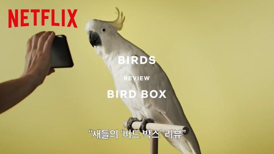 [Netflix] 버드 박스 - 새(Bird) 리뷰 영상