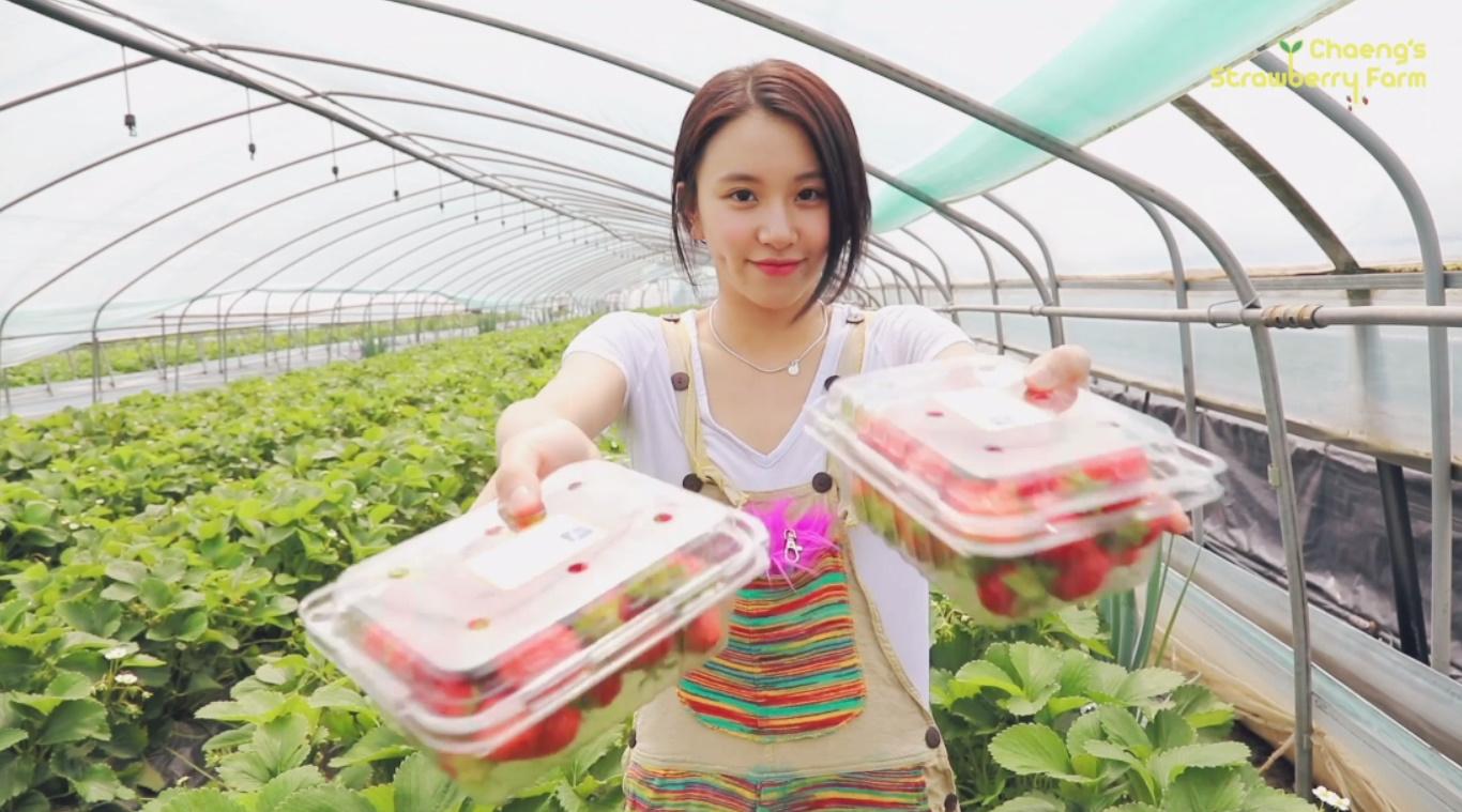 채영 TV EP.챙의 딸기농장