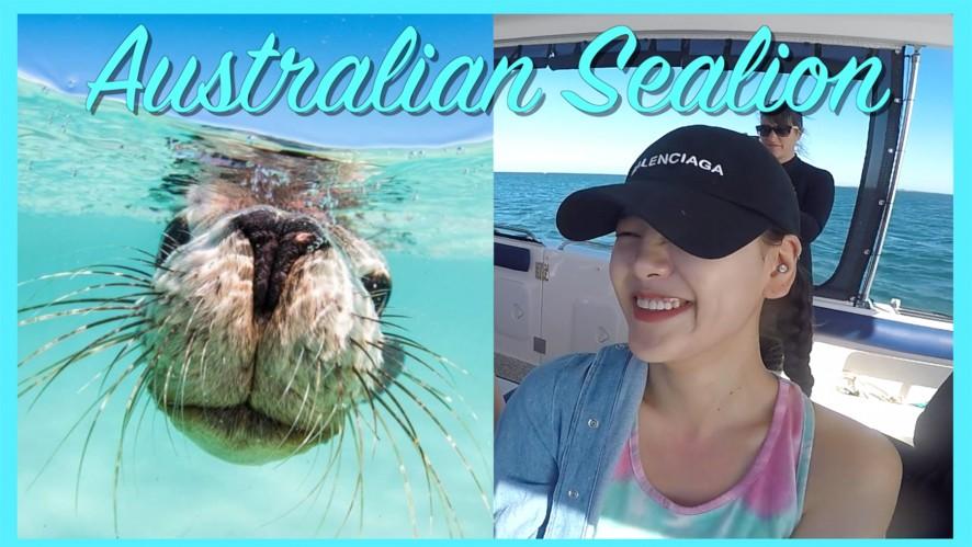 [엠마뷰티 EMMA BEAUTY] 바다사자와 함께 수영 실화? 삼남매 바다사자와 수영하기 챌린지 Clear! (바다사자투어)  Australian Sealion Tour Vlog
