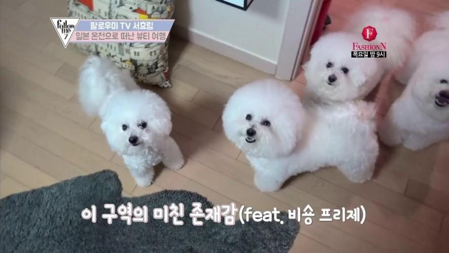 이 구역의 미친 존재감(feat.서효림네 비숑 프리제)