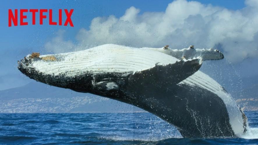 [Netflix] 우리의 지구 - 공식 예고편