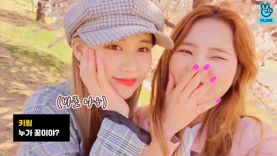[Weki Meki] 엘리나 미모에 기죽어서 올해 벚꽃 벌써 다 졌다네요,,, (Elly&Rina going cherry-blossom viewing)