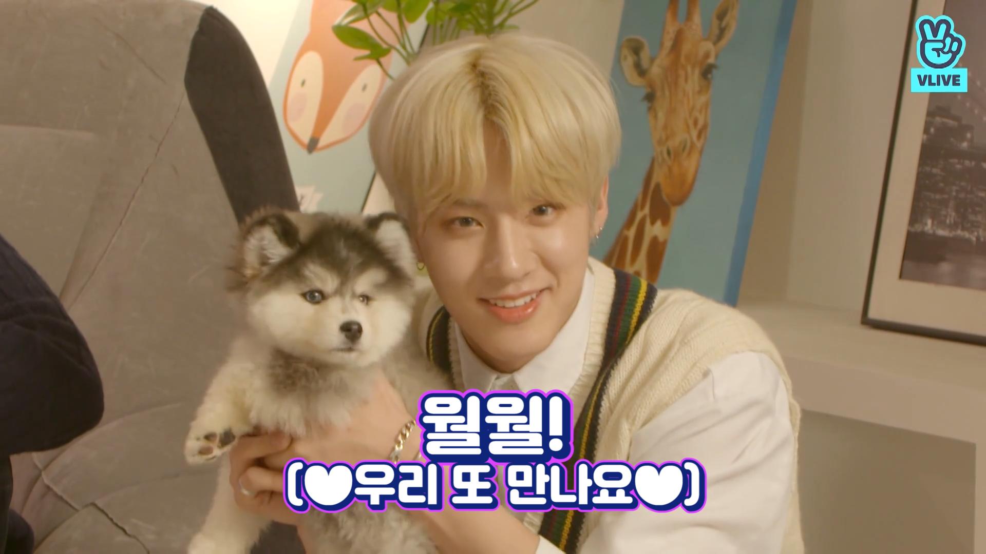 [THE BOYZ] 사람해봤자 다 소용없다 덥즈랑 사진찍고시픈 강아지 저여!!!월월!!🐶 (THE BOYZ taking pictures with puppies)