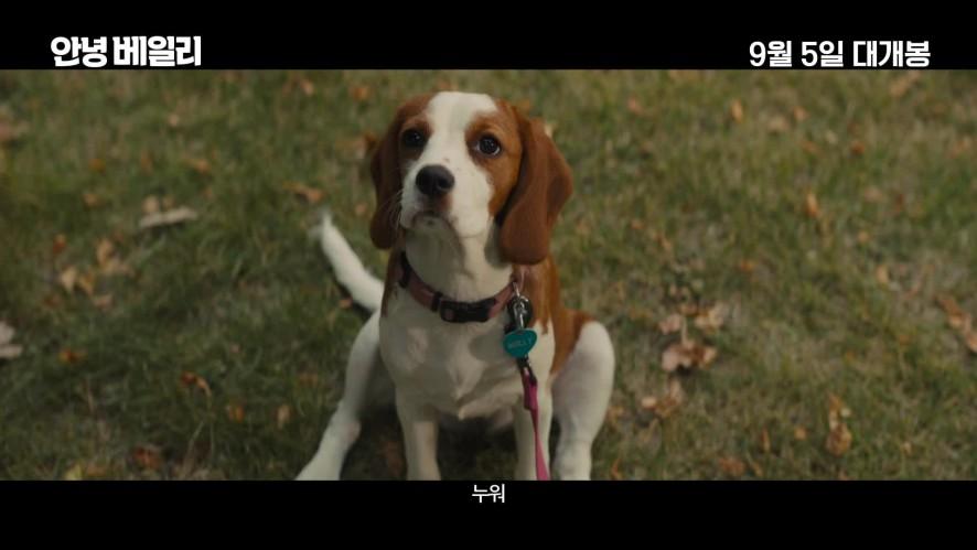 '안녕 베일리' (A Dog's Journey) 메인 예고편