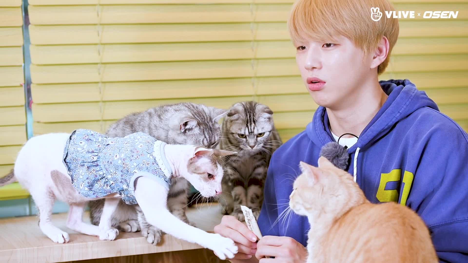 KANGDANIEL 강다니엘, 고양이들과 노는 모습 대공개 #스타로드 02