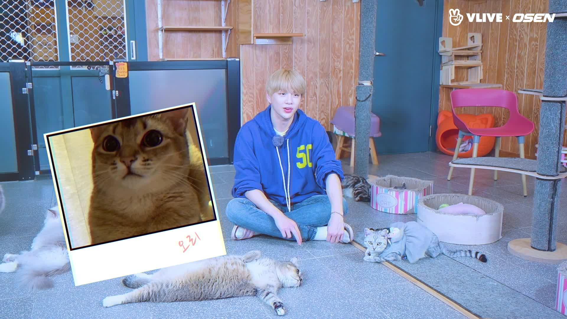 KANGDANIEL 강다니엘, 고양이들과 만난 멈무#스타로드 07