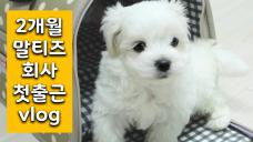 """[강아지 vlog]가족이 생겼어요♥︎ 생후 2개월 말티즈 """"둥이"""" 회사 첫출근vlog"""