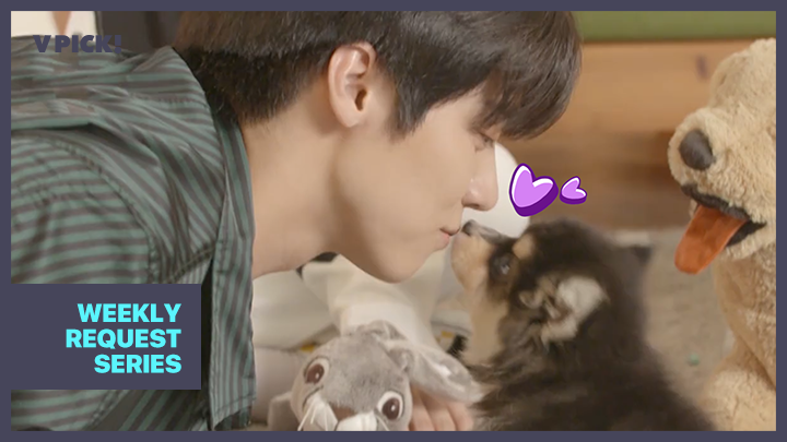 [N.Flying] 21세기 루브르 추천작! <댕댕이가 사랑한 조각상> (N.Flying playing with puppies)