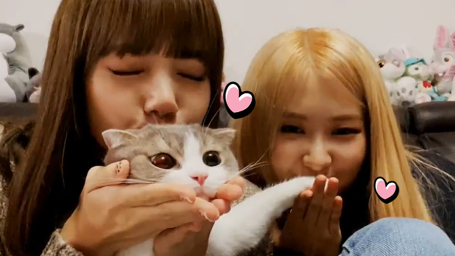 [BLACKPINK] LISA&ROSÉ playing with cats~🚪👼