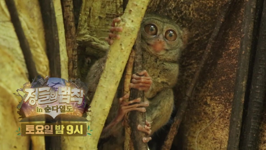 [정글의법칙] Ep.10 예고 '믿기 힘든 만남의 순간! 숲의 정령과 교신 성공..? 정법 in 순다열도' / 'Law of the Jungle' Preview   SBS NOW