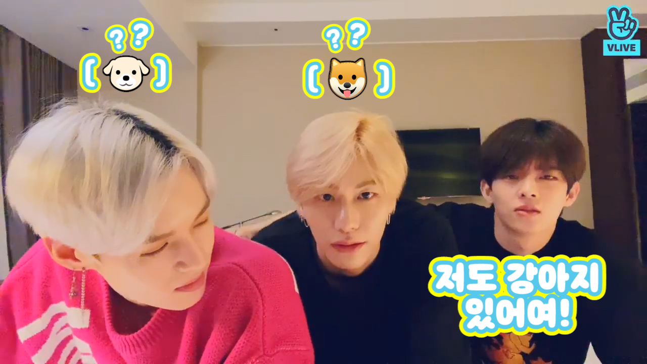 [VICTON] 🍓: 그거네요 강아지 두마리에 고양이 한마리! 🐱 : 저도 강아지 있어요! (VICTON talking about fitness center episode)
