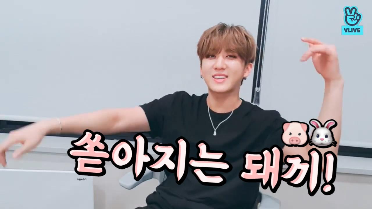 [Stray Kids] 소중한 시그니처의 탄생 '쏟~아지는 돼~끼~🐷🐰' 모두 건들ㄴㄴ (CHANGBIN naming his broadcast)