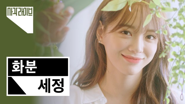 세정 (SEJEONG) - 화분 (Plant) | 사각라이브 Square Live