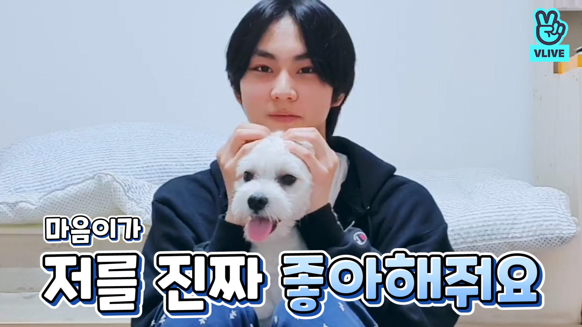 [ENHYPEN] 진짜 완전 리얼 귀여운 ㅁr음0l와 마음이🐾 (JUNGWON's V with his puppy)
